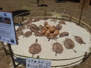 turtle-arts-4